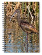 White-faced Ibis In The Wetlands Spiral Notebook