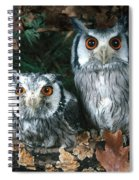 White Faced Scops Owl Spiral Notebook