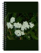 White Flowers In Green Field Spiral Notebook