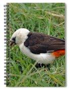 White Headed Buffalo Weaver Spiral Notebook