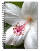 White Hibiscus Spiral Notebook