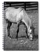 White Horse In A Pasture Among Daisy Flowers Spiral Notebook