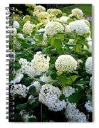 White Hydrangeas Spiral Notebook