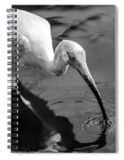White Ibis - Bw Spiral Notebook