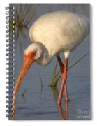 White Ibis In Grass Spiral Notebook