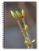 White Lilac Buds Spiral Notebook