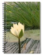White Lily Near Pond Grass Spiral Notebook
