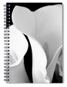 White Lily Trio In Black And White Spiral Notebook