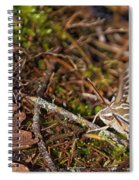 White-lined Sphinx Moth Spiral Notebook