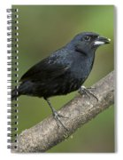 White-lined Tanager Spiral Notebook
