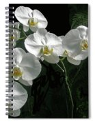 White Moth Orchid Phalaenopsis And Ferns Spiral Notebook