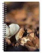 White Mushroom Long Gills Spiral Notebook