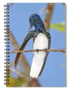 White-necked Jacobin Spiral Notebook