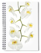 White Orchid-4783 Spiral Notebook