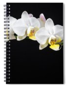White Orchids Spiral Notebook