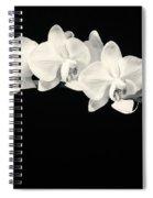 White Orchids Monochrome Spiral Notebook