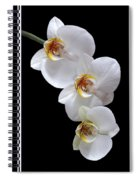 White Orchids On Black Vertical Spiral Notebook