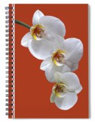 White Orchids On Terracotta Vdertical Spiral Notebook