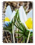White Pasque Flower Spiral Notebook