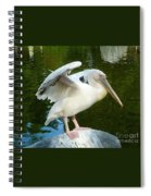 White Pelican Standing  Spiral Notebook