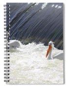 White Pelicans  Spiral Notebook