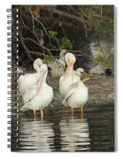 White Pelicans Grooming Spiral Notebook