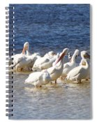 White Pelicans On Sanibel Island Spiral Notebook