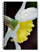White Petaled Daffodil Spiral Notebook