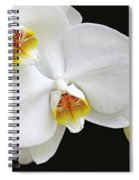White Phalaenopsis Orchid Flowers Spiral Notebook