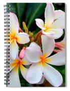 White Plumeria - 1 Spiral Notebook