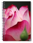White Red Rose 01 Spiral Notebook