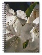 White Rhododendron B Spiral Notebook