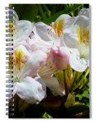 White Rhododendron In Sunlight Spiral Notebook