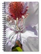 White Rhododrendon Spiral Notebook