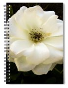 White Rose With Buds Spiral Notebook