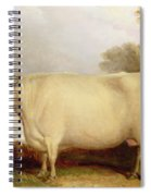 White Short-horned Cow In A Landscape Spiral Notebook