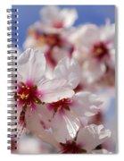 White Spring Almond Flowers Spiral Notebook