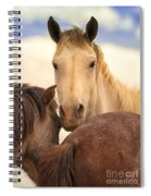 White Stallion Wild Horses On Navajo Indian Reservation  Spiral Notebook