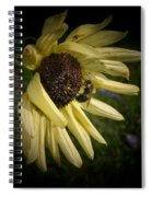 White Sunflower And Bee Spiral Notebook
