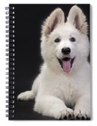White Swiss Shepherd Dog Spiral Notebook