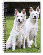 White Swiss Shepherd Dogs Spiral Notebook
