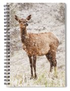 White Tailed Deer In Snow Spiral Notebook