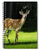 Young Buck Spiral Notebook