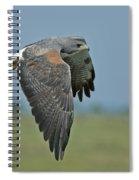 White-tailed Hawk Spiral Notebook