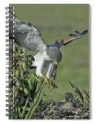 White-tailed Hawk At Nest Spiral Notebook