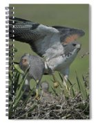 White-tailed Hawks At Nest Spiral Notebook