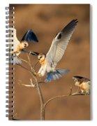 White-tailed Kite Trio Spiral Notebook