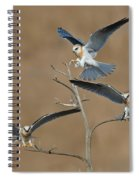 White-tailed Kite Young Spiral Notebook