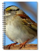 White Throated Sparrow And Blue Sky Spiral Notebook
