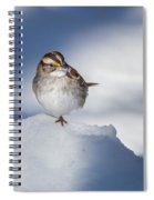 White Throated Sparrow Square Spiral Notebook